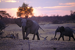Elephants, Hwange Natl. Park