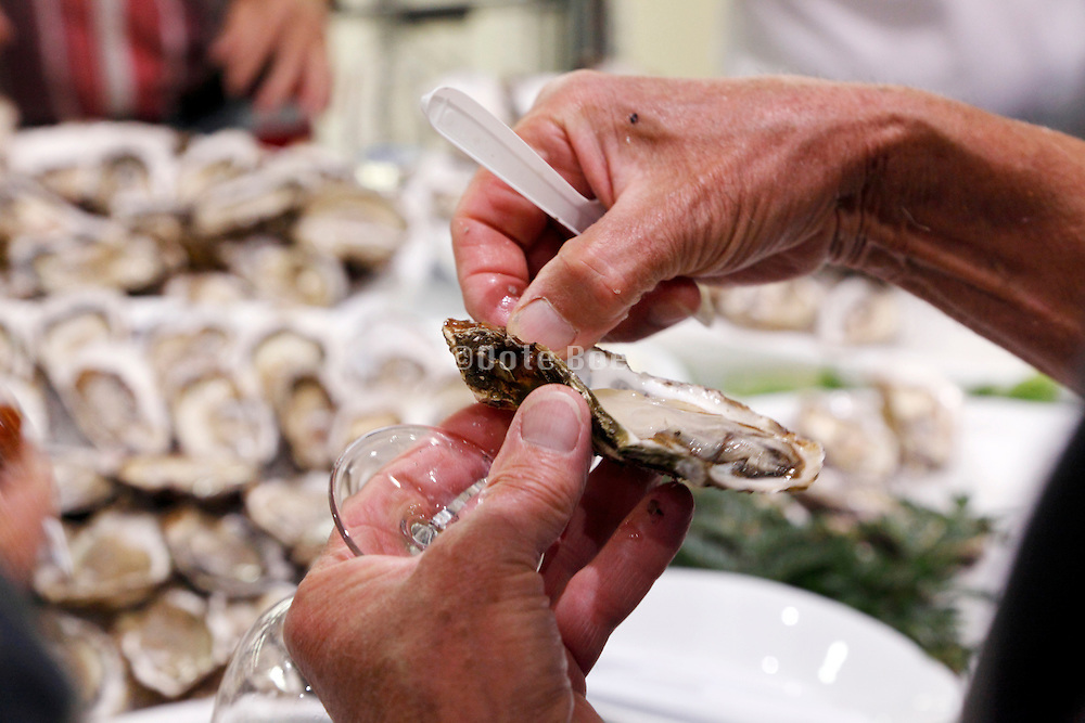 eating of oysters