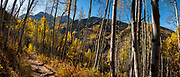 In Telluride, hike Jud Wiebe Trail to Sneffels Highline Trail, during peak fall colors in the first week of October in Uncompahgre National Forest, Colorado, USA. This image was stitched from multiple overlapping photos.