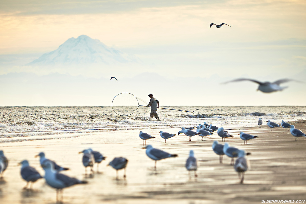 Mt. Redoubt stands in the background as a man wades through the surf with his net fishing for Coho salmon near the mouth of the Kenai River, Alaska.