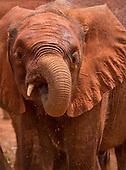 Kenya Elephant Rescue Center