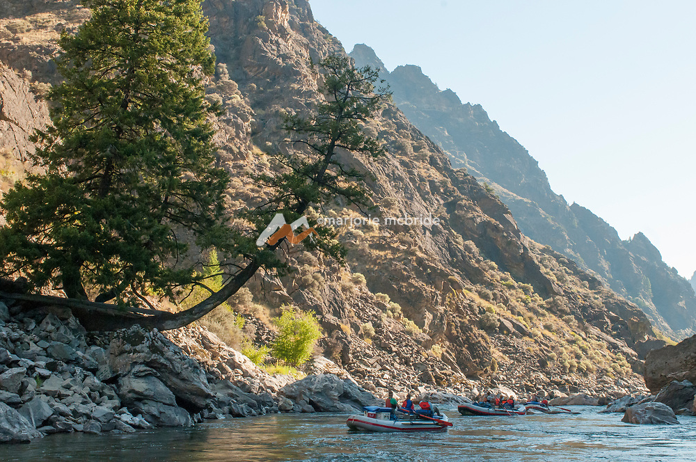 Boaters under beautiful arching tre during morning in The Impassible Canyon on the Middle Fork of the Salmon River during six day rafting vacation, Idaho.