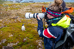 Shaylyn Potter Photographing Gentoo Penguins