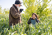 Ward Burroughs and. his granddaughter Marianna tasting the triticale for sweetness.