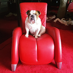 """Coco Austin releases a photo on Twitter with the following caption: """"""""My name is King Maximus and I'm the only dog that can sit in dads red chair.. I'm feeling myself"""""""". Photo Credit: Twitter *** No USA Distribution *** For Editorial Use Only *** Not to be Published in Books or Photo Books ***  Please note: Fees charged by the agency are for the agency's services only, and do not, nor are they intended to, convey to the user any ownership of Copyright or License in the material. The agency does not claim any ownership including but not limited to Copyright or License in the attached material. By publishing this material you expressly agree to indemnify and to hold the agency and its directors, shareholders and employees harmless from any loss, claims, damages, demands, expenses (including legal fees), or any causes of action or allegation against the agency arising out of or connected in any way with publication of the material."""