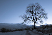 This stunning tree with the Nevis mountain range in the background was taken in late November. This was the first day of snow that winter and the blue hour after sunset was perfect. This image was taken on the way back from the famous parallel roads of Glen Roy to Speanbridge.