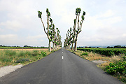 rural road with recently pruned trees France Languedoc