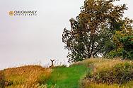 Whitetail deer at Niobrara River State Park, Nebraska, USA