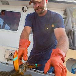 "Brandon Olsen, crew on ""Reel Catch"" at the Friendship Lobster Co-op in Friendship, Maine."