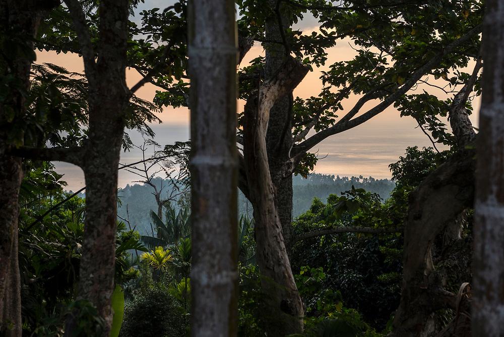 Tropical sunset view through trees toward the palm-fringed coastline on Karkar Island, Papua New Guinea