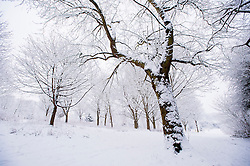 Snow covered trees at the Arboretum, Evington Village, Leicester, Leicestershire, England, UK.