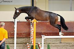 Benicia<br /> KWPN Paardendagen 2009<br /> © Hippo Foto - Leanjo de Koster