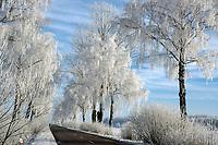10.12.2014 gmina Krynki woj podlaskie N/z szadz na drzewach fot Barbara Sojko / AGENCJA WSCHOD