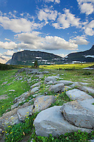 Alpine meadows at Logan Pass, Glacier National Park Montana USA