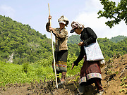 Two Khmu ethnic minority women planting rice seeds in an upland field. In slash and burn cultivation, the man (usually) walks round the land with a big stick making small indentations in the soil. The woman follows behind throwing from quite a height and with incredible precision, a handful of rice into the hole.  When it next rains the soil will wash into the hole and cover the rice.
