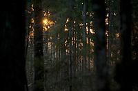 03.2015 Puszcza Bialowieska N/z las o zachodzie slonca fot Michal Kosc / AGENCJA WSCHOD
