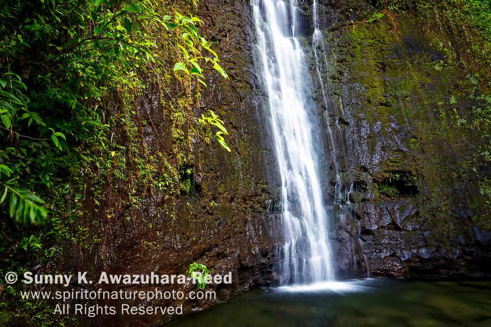 Close up of Manoa Falls with tropical foliage, Honolulu, Oahu Island, Hawaii.