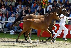 085-Zafnalita<br /> KWPN Paardendagen Ermelo 2004<br /> Photo © Hippo Foto