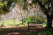 Arboretum Park Bench