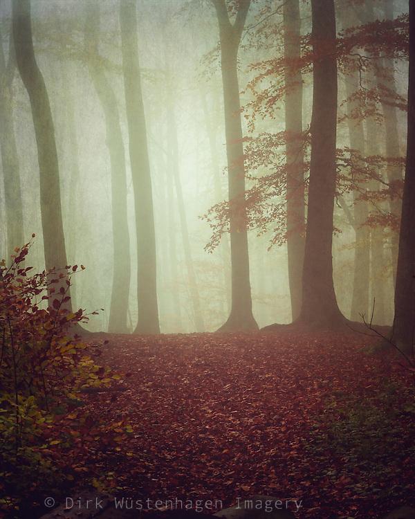 Misty November morning in a forest<br /> <br /> Prints & more: https://society6.com/product/november-light-rp6_print#1=45