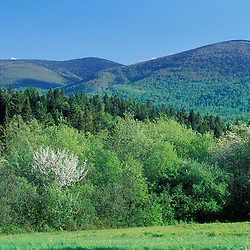 Bunnell Mountain, part of  The Nature Conservancy's Bunnell tract.  Northern Forest.  Columbia, NH