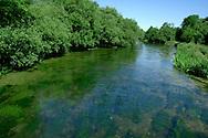 Chalk Stream, River Itchen, Hampshire, UK