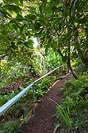 A steep path covered with nutmeg shells through tropical foliage in the Gemrose Eden Garden, St. David's, Grenada