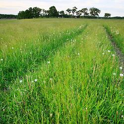 Tractor tracks in a hay field on a farm in Ipswich, Massachusetts.