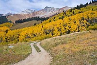An old jeep road leading to Silver Mountain from Ophir Pass Road, San Juan Mountains, Colorado.