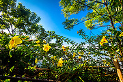 A backyard in Hoi An, Vietnam. The Yellow flowers stand out against the darker natural background. RAW to Jpg