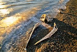 Whale bones on the beach at Herschel Island