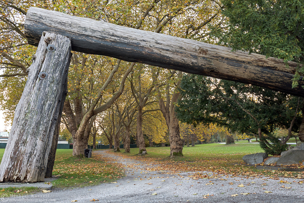 Lumberman's Arch at the entrance to a path through a double row of London Plane Trees (Platanus x acerifolia) at Stanley Park in Vancouver, British Columbia, Canada