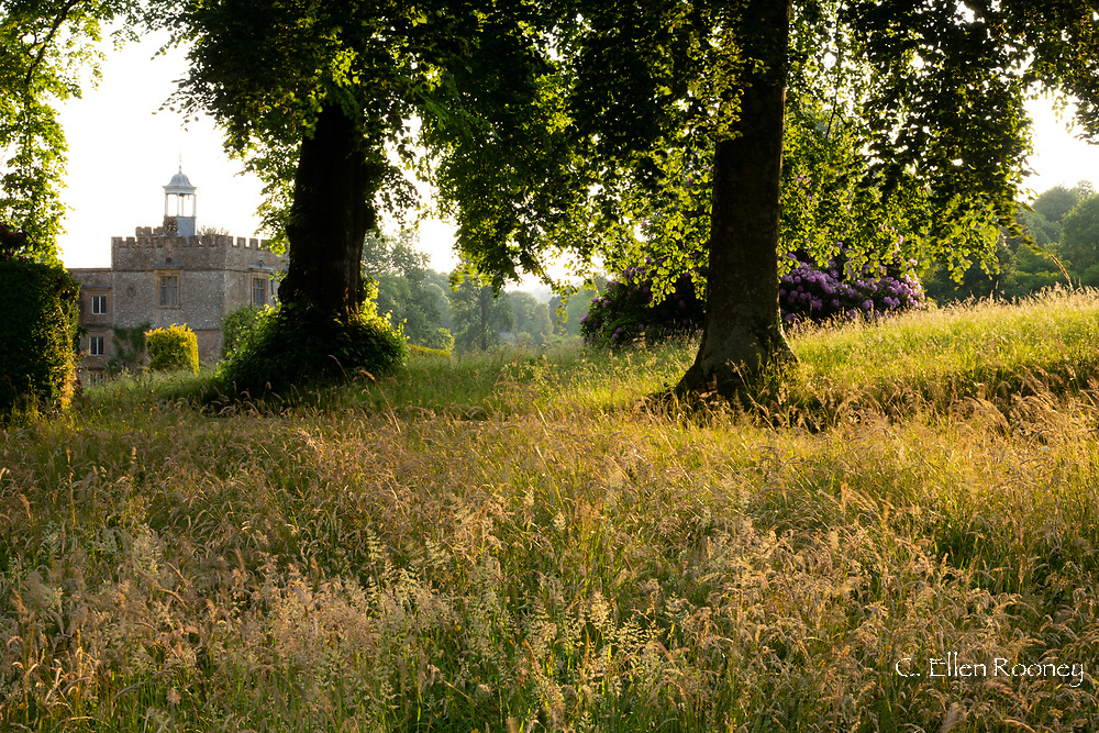 Golden light on meadow grass at Forde Abbey, Chard, Dorset, UK