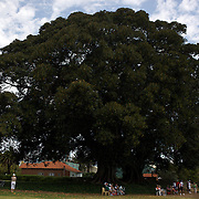 Spectators sit and watch the tennis under the Moreton Bay Fig Tree, at Robertson Park, during the 2009 ITF Super-Seniors World Team and Individual Championships at Perth, Western Australia, between 2-15th November, 2009.