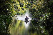 A local man driving a boat up the Sekonyer River through the rainforest in Tanjung Puting National Park, Borneo, Indonesia