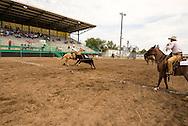Will James Roundup, Ranch Rodeo, Three Man Cow Doctoring, Hardin, Montana, Tom Curtin, Ed Disney, Todd Hansen.