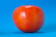 a tomato against a bright blue background