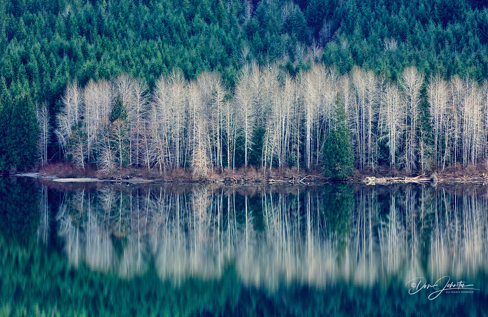 Early spring reflections in Sproat Lake, near Port Alberni, BC, Canada