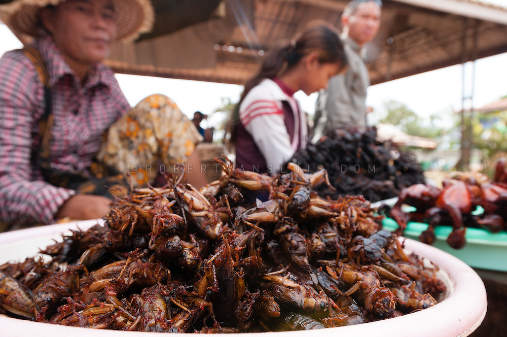 Deep fried insects, a delicacy in Cambodia