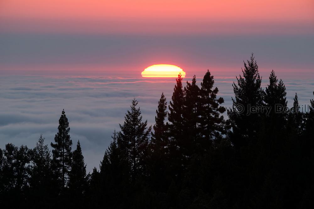 The sun sets beyond a foggy Pacific Ocean and fir forest high above the Sonoma Coast near Jenner, California