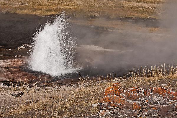 Artesia Geyser at Lower Geyser Basin.  Yellowstone National Park, Wyoming, USA.