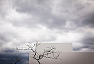 Dead tree in front of the 21st Century Museum of Contemporary Art, Kanazawa, Japan, Asia