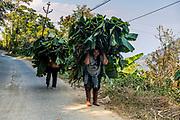 Women carrying hugw palm leaves home, Lungleng, Mizoram, India