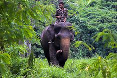 Indonesia - World Elephant Day - 12 Aug 2016