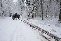 Tree cutting, Bialowieza, Poland. February 2009