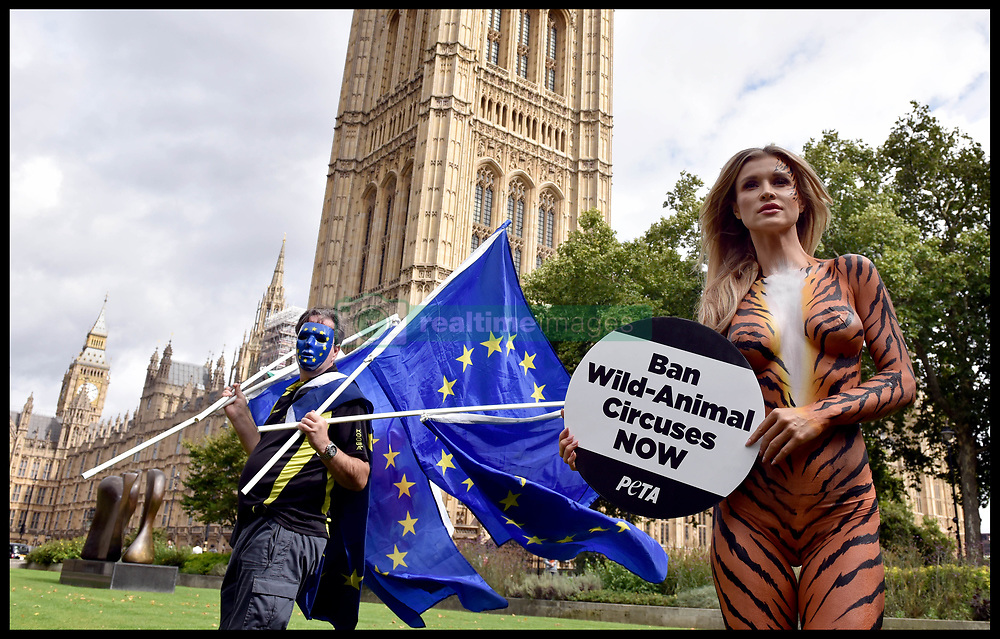 September 11, 2017 - London, London, United Kingdom - Image ©Licensed to i-Images Picture Agency. 11/09/2017. London, United Kingdom. Joanna Krupa photocall. A Pro-Europe protester walks past  Polish-American model Joanna Krupa  posing bodypainted as a tiger outside Westminster in order to put pressure on the government to introduce a long-overdue bill banning the use of wild animals in travelling circuses.Picture by Andrew Parsons / i-Images (Credit Image: © Andrew Parsons/i-Images via ZUMA Press)
