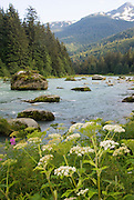 Chilkoot River runs from the Chilkoot L. outlet just a few miles down to salt water at Haines, Alaska.