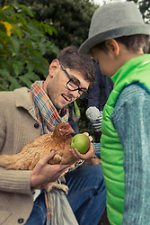 Father holding a chicken bird and son feeding apple, Bavaria, Germany,