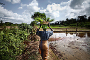 Woman Farming on a Charles Taylor land, 2010