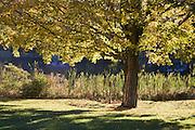 Backlit tree at side of pond.